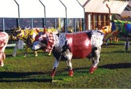 Swiss Cows in Gruyere