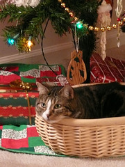Tessie In a Christmas Basket