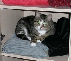 Tessie on a shelf