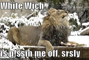 funny-pictures-upset-lion-snow